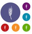 barley spike icons set