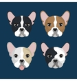 bulldog breed design vector image