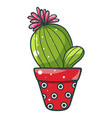 home cactuse icon decorative green pot with vector image