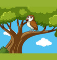 owl stands on branch at daytime vector image vector image