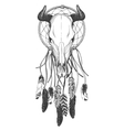 Bull skull with feathers and dreamcatcher vector image