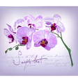 beautiful orchid flower vector image vector image