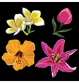Set of realistic flowers isolated on black vector image vector image