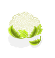 Cauliflower with leaves vector image vector image