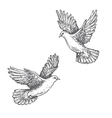 doves sketch vector image