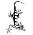 lizard hand-drawn vector image vector image