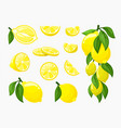 set lemons yellow citrus fresh vector image vector image