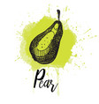 a pear hand drawn graphics vector image vector image