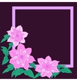 Pink terry clematis vector image