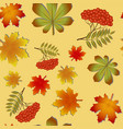 autumn pattern with maple leaves and rowan vector image vector image