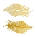 beautiful Boho feathers vector image vector image