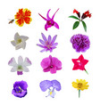 colorful realistic flower isolated collection set vector image vector image