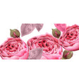 pink roses watercolor background vector image vector image