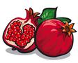 pomegranates vector image vector image