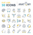 set line icons anatomy and physiology vector image
