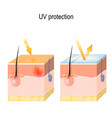 uv protection for sensitive skin vector image vector image