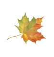 colorful maple leaf isolated on a white vector image