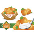fresh apricots on spoon with cream vector image vector image