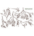 set sketch hand drawn mistletoe vector image