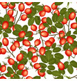 wild rosehip seamless pattern vector image vector image