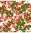 wild rosehip seamless pattern vector image