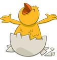 little chicken cartoon character vector image vector image