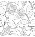 sunflower plant pattern on white background vector image vector image