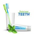 Toothbrushes In Glass And Toothpaste vector image
