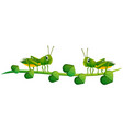 two grasshoppers on green vine vector image