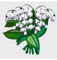 bouquet white flowers vector image vector image