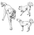 Handicapped dog vector image vector image