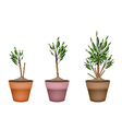Yucca Tree and Dracaena Plant in Flower Pots vector image