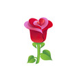beautiful red rose isolated on white design vector image