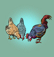 chickens and rooster farm bird vector image