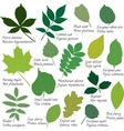 Leaves collection with names vector image