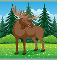 moose on grass in coniferous forest vector image