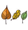 three leaves from the trees clipart color on a vector image vector image