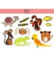 Set of Cute cartoon Animals and birds Pets Turtle vector image vector image