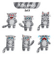 set of tabby cat characters set 3 vector image