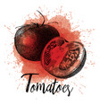 tomatoes in hand drawn vector image vector image