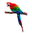 bird pixel art parrot pixel isolated vector image