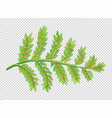 leaves with little seeds vector image vector image