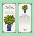 vintage label with potted flower fuchsia vector image vector image