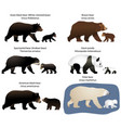 bears and bear-cubs vector image