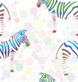 Colorful zebra on background of multicolored vector image vector image