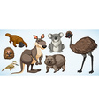 Different types of wild animals in Australia vector image vector image