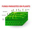 Fungi parasites on plants