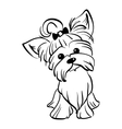 sketch funny Yorkshire terrier dog sitting vector image