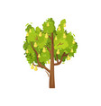 tree with ripe pears and green leaves vector image