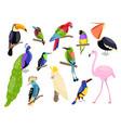 tropical exotic birds bright color parrots vector image vector image